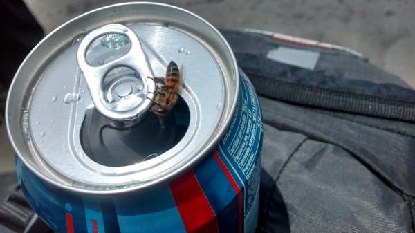 mendiga abeja