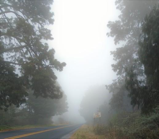 Hello! Neblina