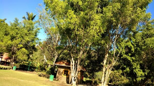 Mas cabañas y árboles